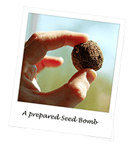 Seed Balls in Chennai